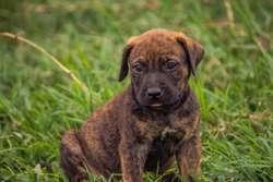 Venta de Cachorros  Full Garantia
