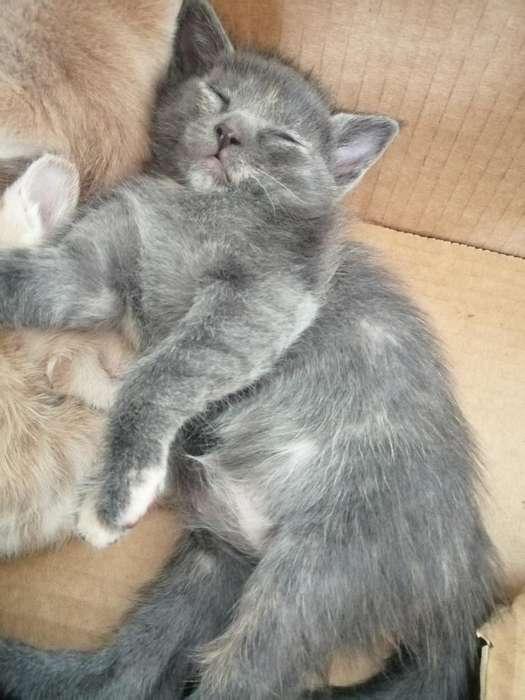 Se Dan Lindos Gatitos en Adopción