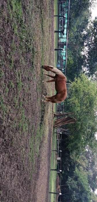 Vendo Hermoso <strong>caballo</strong>