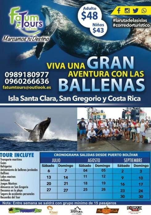 Ballenas Jorobadas Isla Santa Clara