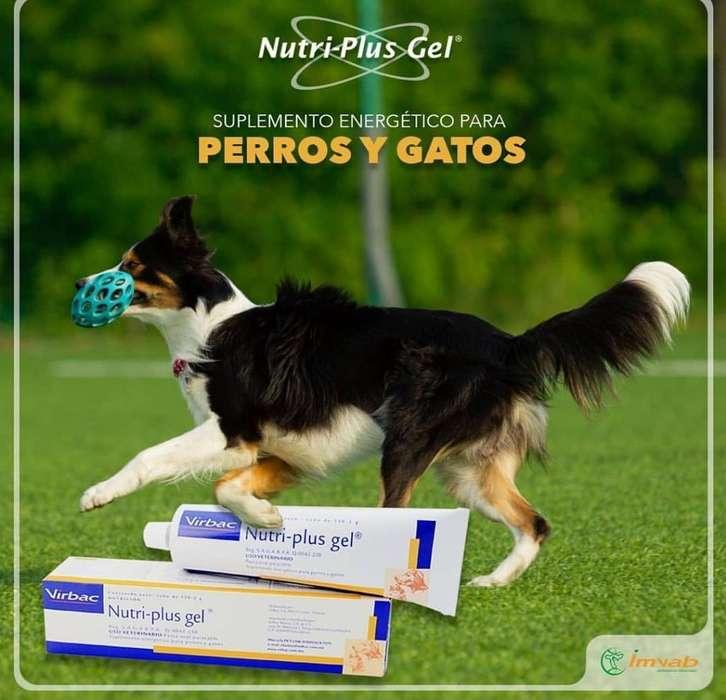 Nutriplus Gel Virbac <strong>mascota</strong>s