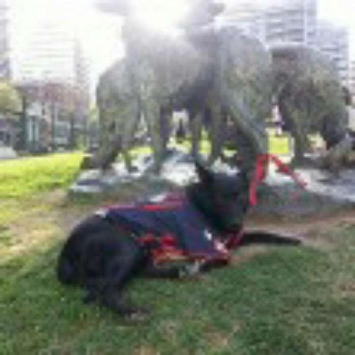 Doy en Adopción <strong>perra</strong> Mestisa 3 Años