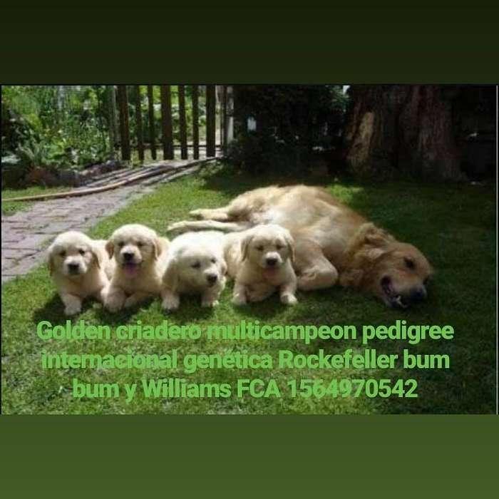 Golden criadero FCA multicampeon pedigree internacional 59mil
