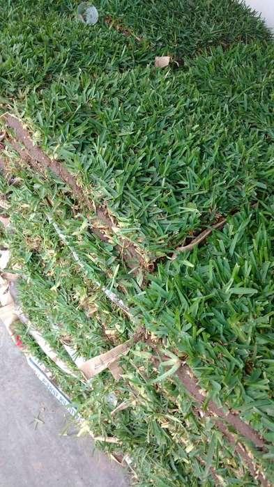 venta y servicio de grass natural