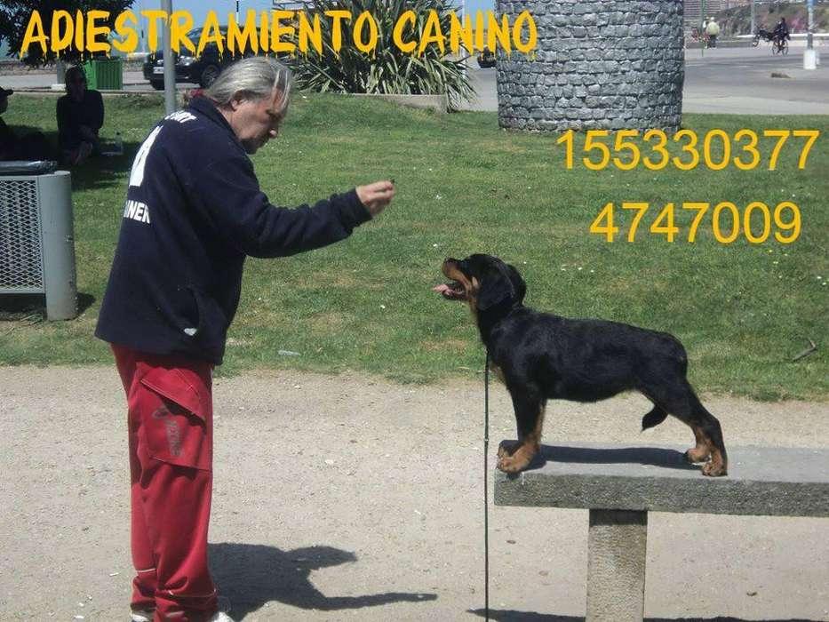 Centro Integral Para Mascotas,<strong>adiestramiento</strong> ,Guarderia,Peluqueria