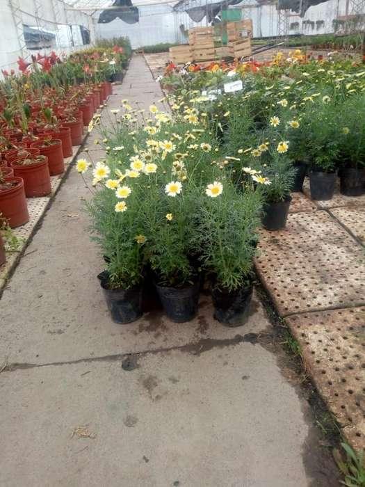 Plantas X Encargo