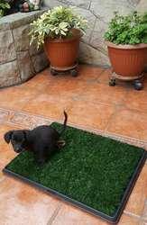 Baño Portatil Perros Gatos Gruponatic San Miguel Surquillo Independencia La Molina 941439370