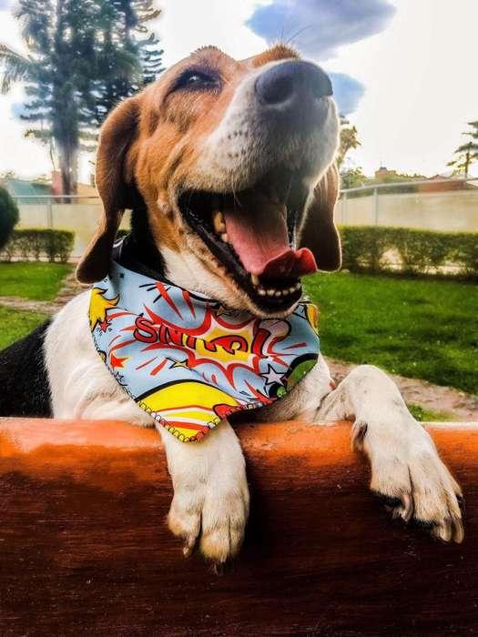 Pañoletas para Mascotas Personalizadas, como quieras!!! / Perros / Gatos / Accesorio