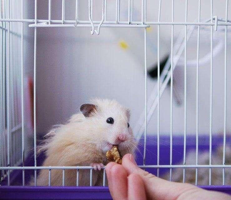 Vendo Hermosa Jaula para Hamster u otro animal