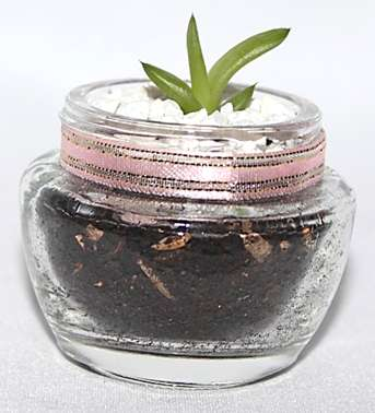 Recordatorios Con Plantas Suculentas