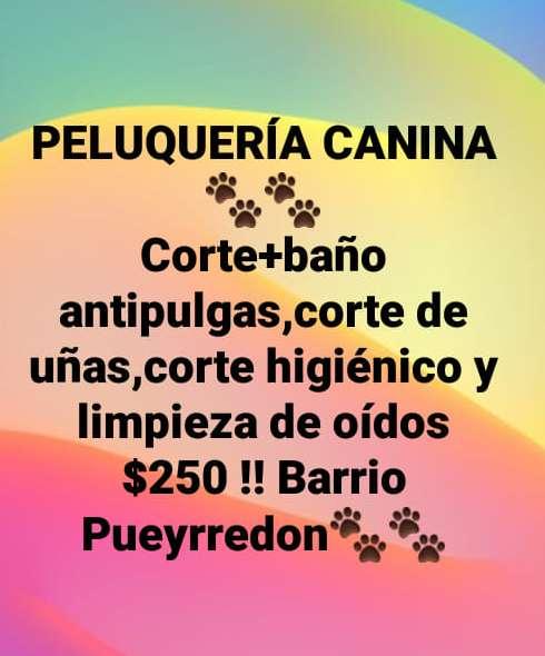 PELUQUERÍA CANINA !