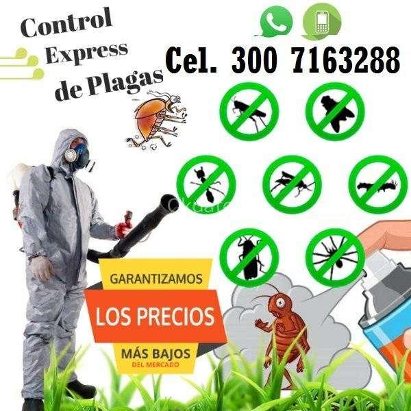 SERVICIO DE FUMIGACION DE PLAGAS EN BOGOTA, PULGAS, ACAROS, CUCARACHAS, RATAS Y RATONES CEL. 3007163288