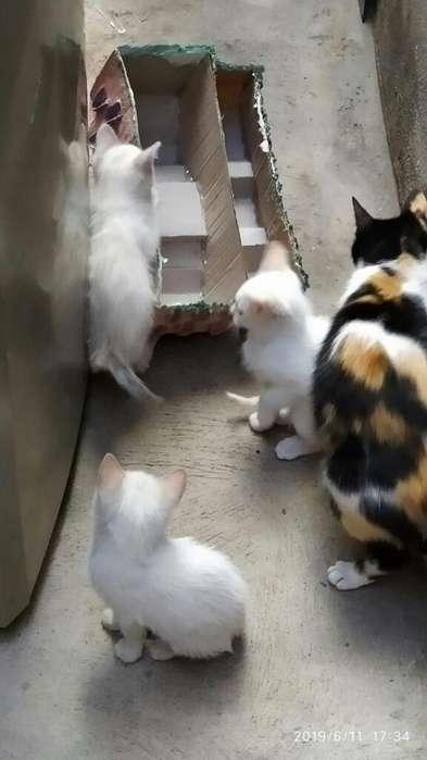Doy Gatitos en Adopción