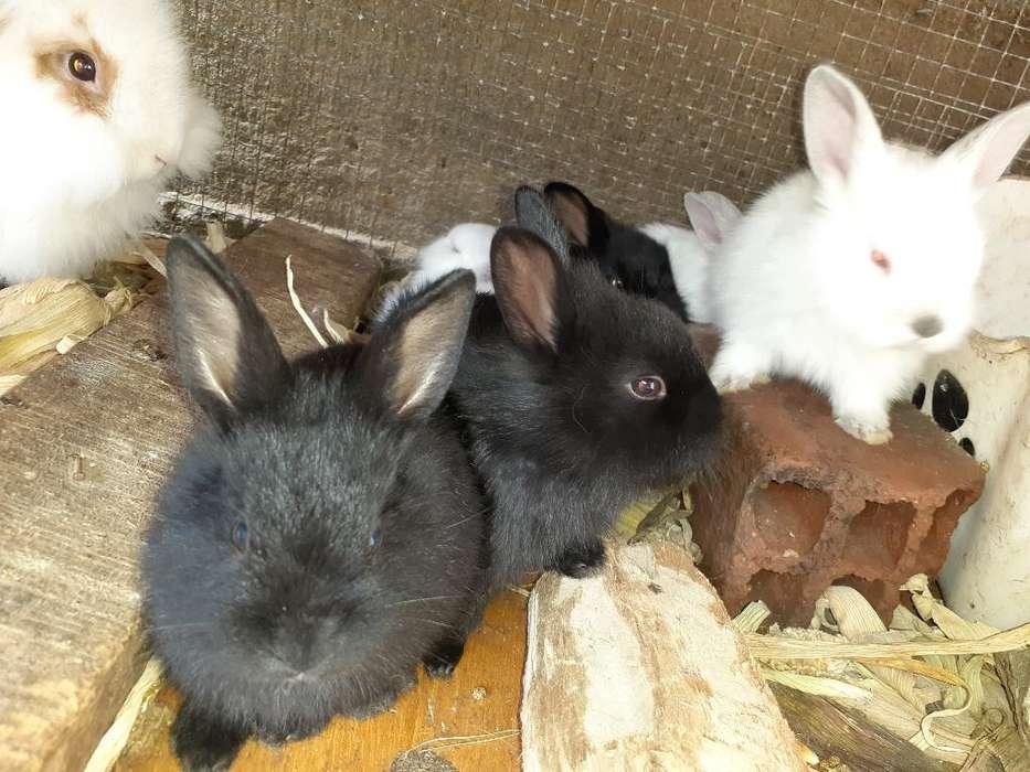 Bellos Conejos Cabeza de Leon