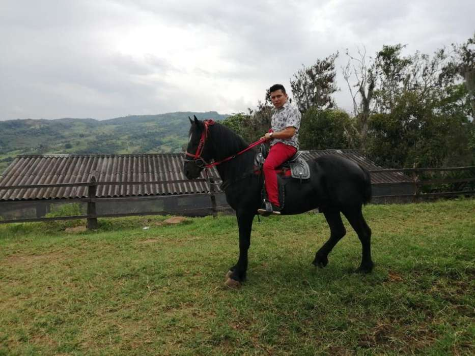 Caballo Frizon con Percheron