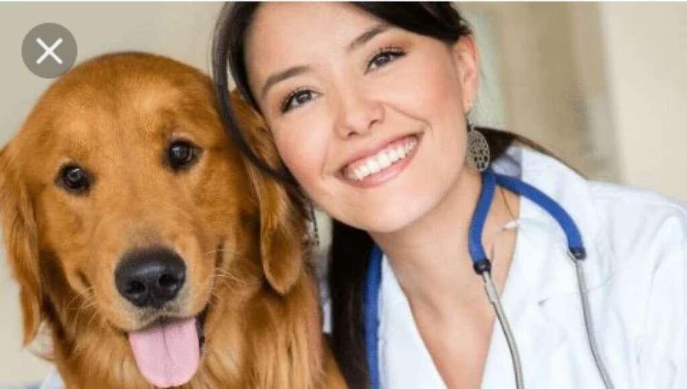 Se Solicita Medico Veterinario(@)