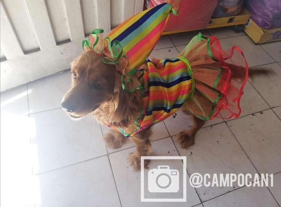 Disfraces para <strong>perro</strong>s Y Gatos