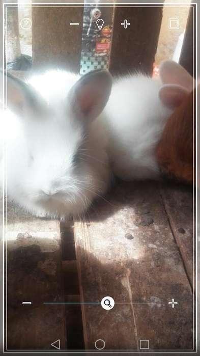 Vendo Conejitos Leon 14 en Guayaquil
