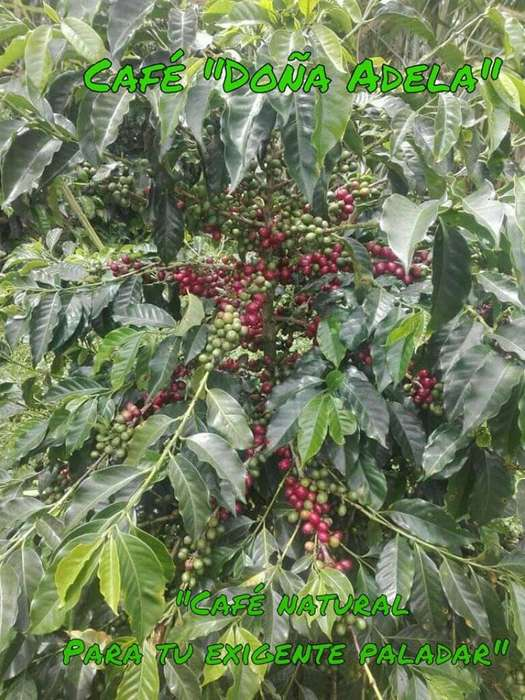 Venta de Cafe Organico para Pasar