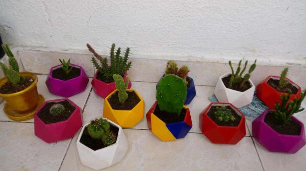 Cactus en macetas de concreto y cemento