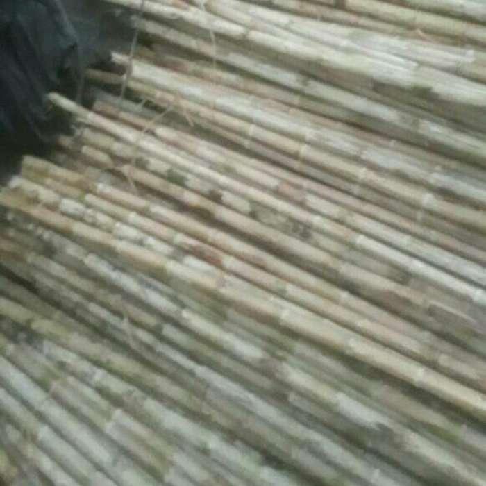 Cañabrava Bambú Guadua Esterilla Inmuniz