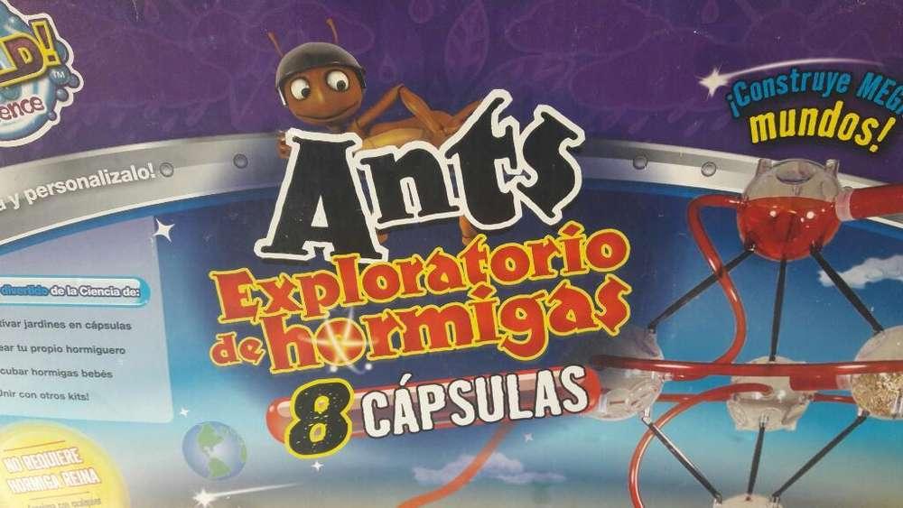 Laberinto de Hormigas