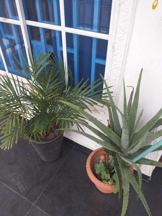 Jardines Plantas Medicinal Y Exoticas