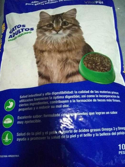 Alimento de <strong>gato</strong>