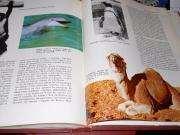 enciclopedias geografia universal ilustrada sopena