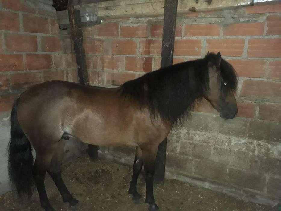 Vendo <strong>caballo</strong> Parkiado