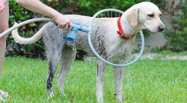 Woof washer manguera baño de perro