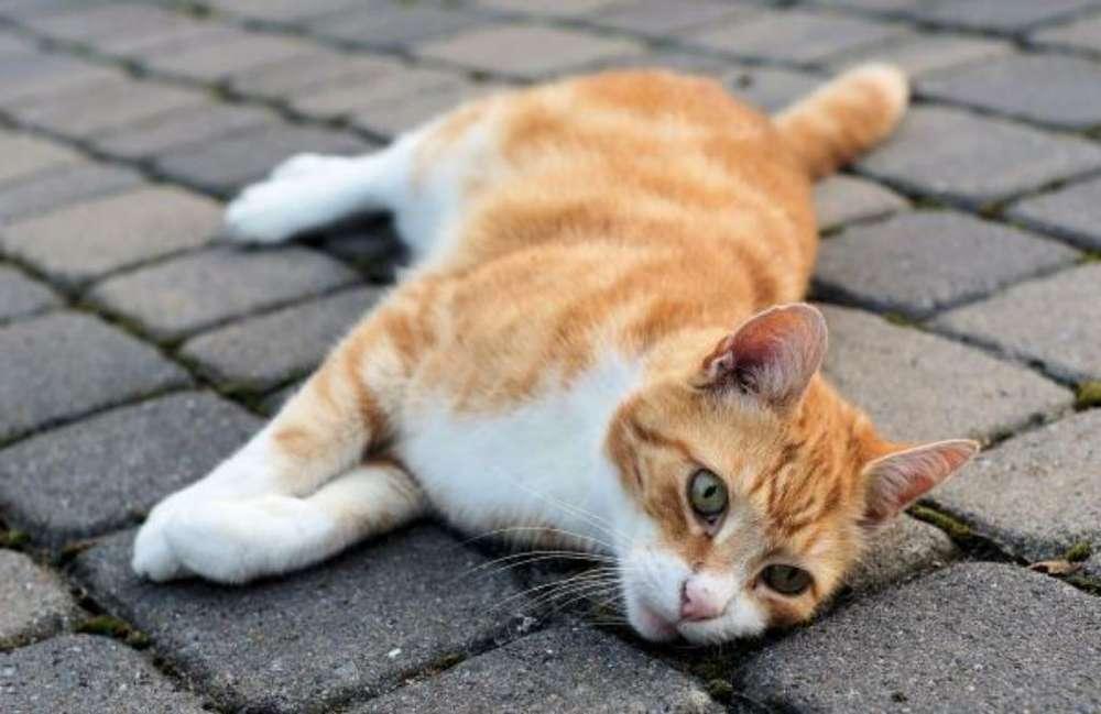 Hermosos Gatos Angora