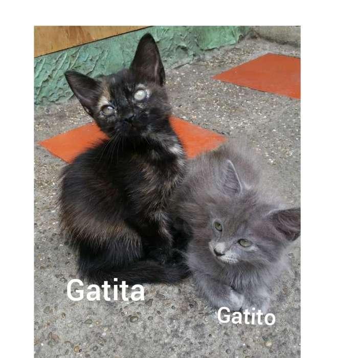 Bellos gatitos bebés se ofrecen en adopción responsable