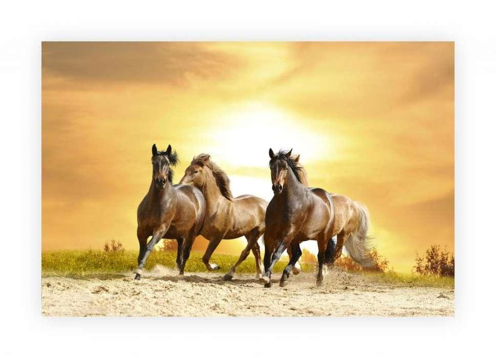 Cuadro decorativo de caballos 2384