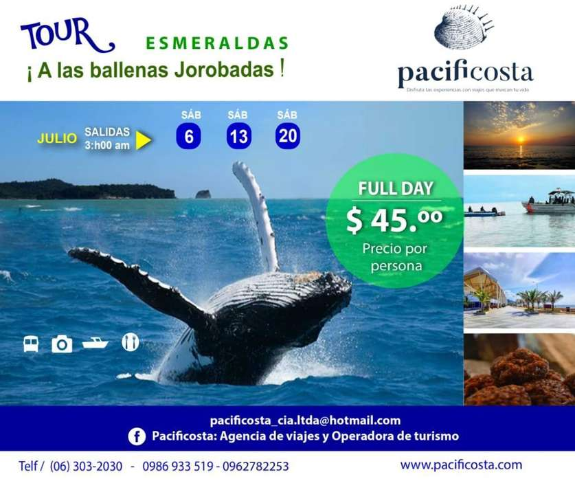Full Day Ballenas Jorobadas