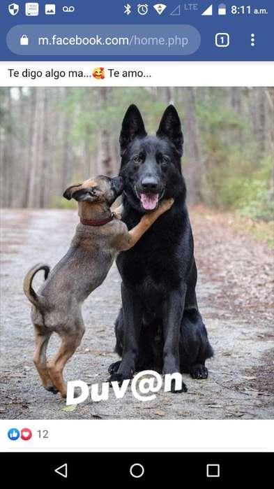 Pasadores de <strong>perro</strong>s Económicos