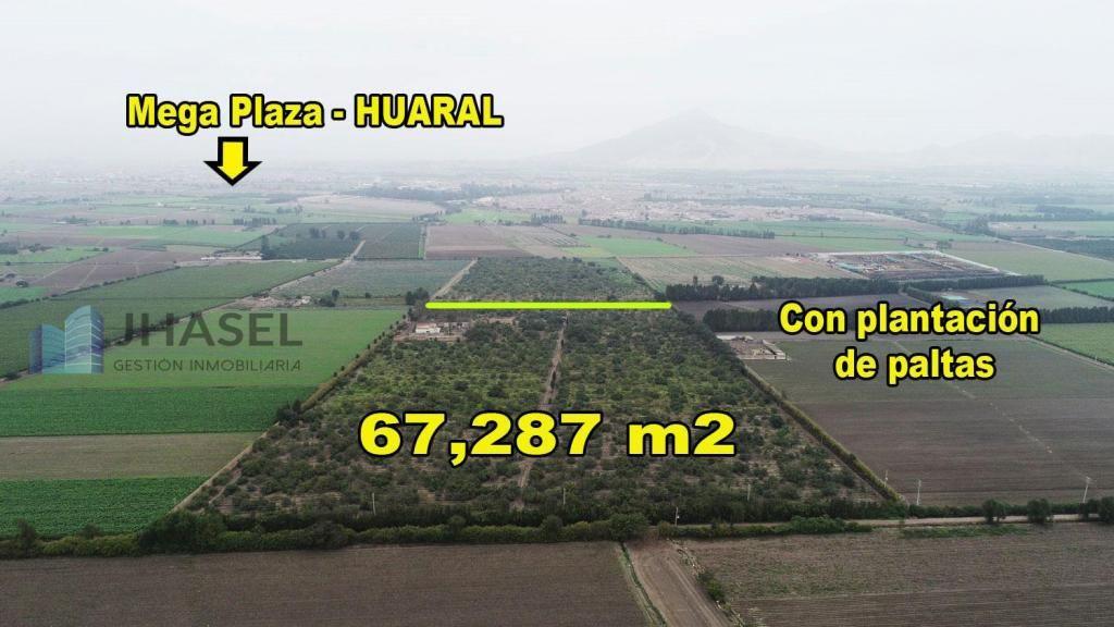 VENDO TERRENO AGRÍCOLA DE 67,287 M2  CON PLANTACIÓN DE PALTAS EN HUARAL