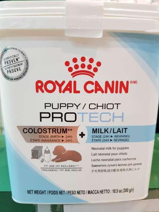 Leche Royal Canin Unica con Calostro