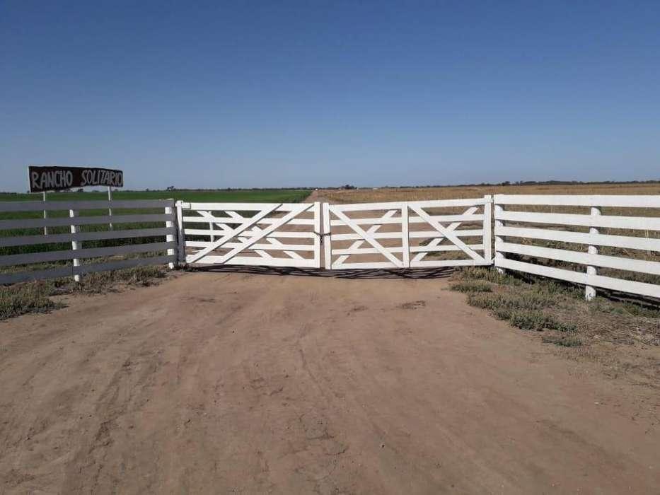 Campo mixto en La Para - 510 ha