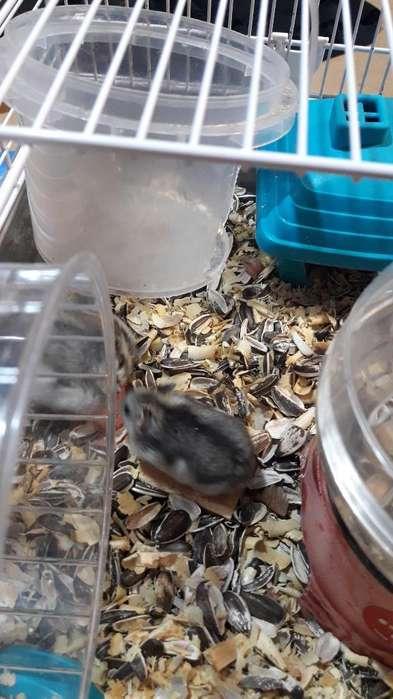 Hamsters(5) Jaula Y Accesorios