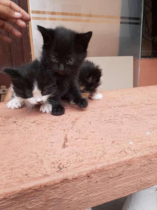 Adopta Un Gatito