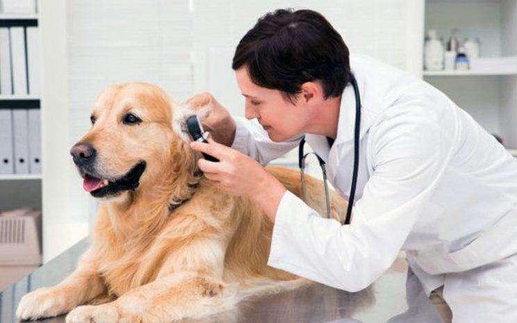 SE REQUIERE MEDICO <strong>veterinario</strong>