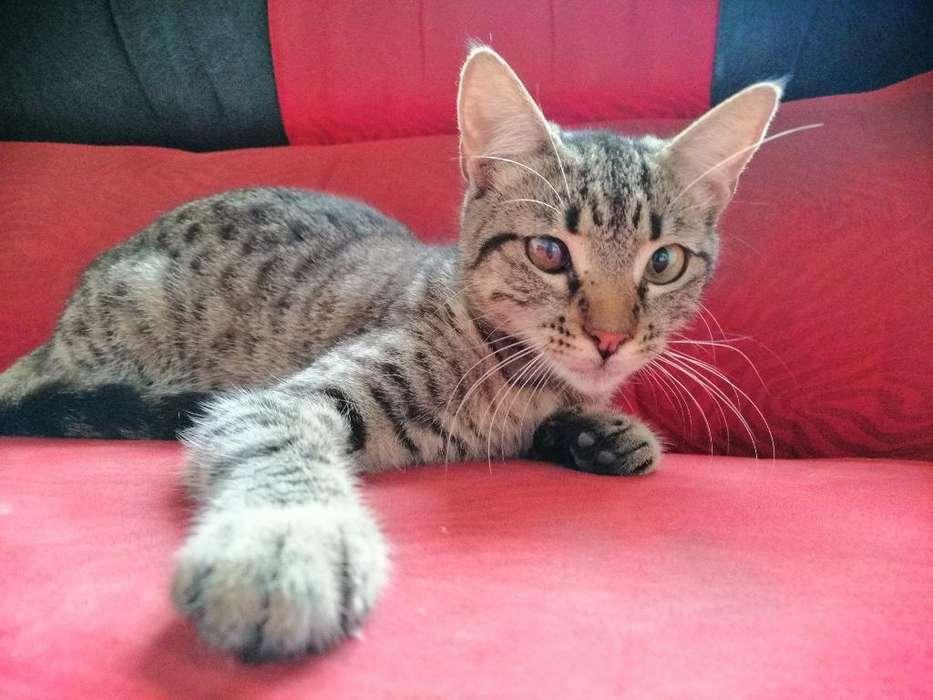 Gatitos en Adopción Responsable
