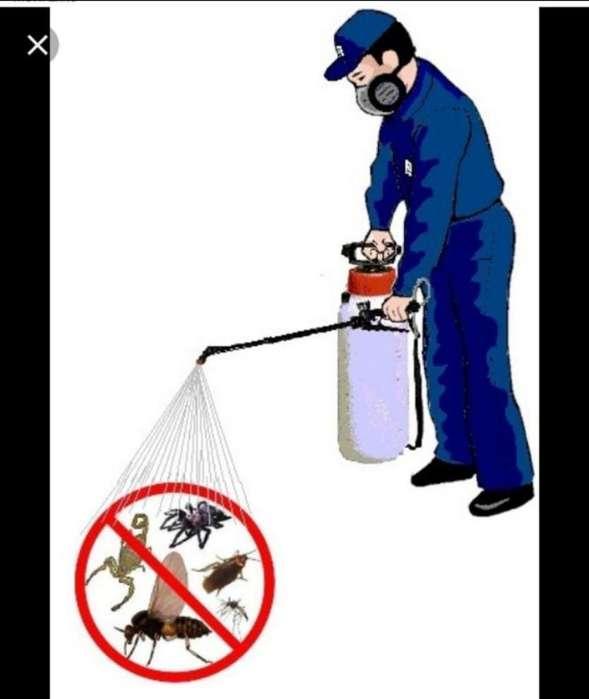 Servicio de Fumigación Certicados