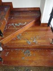 Limpieza Y Reparación D Pisos Laminados