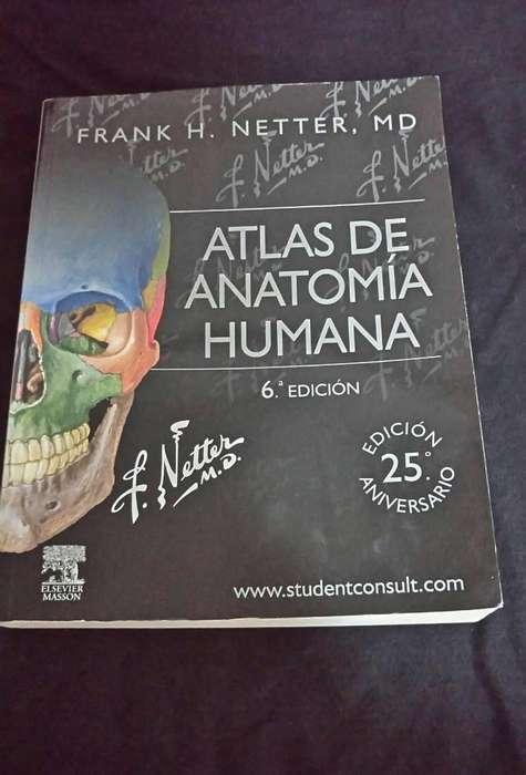 Atlas de Anatomía Humana Netter 6ta Edición