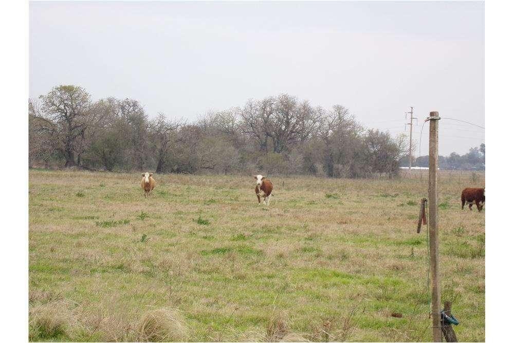 Campo Agrícola Ganadero - Candioti
