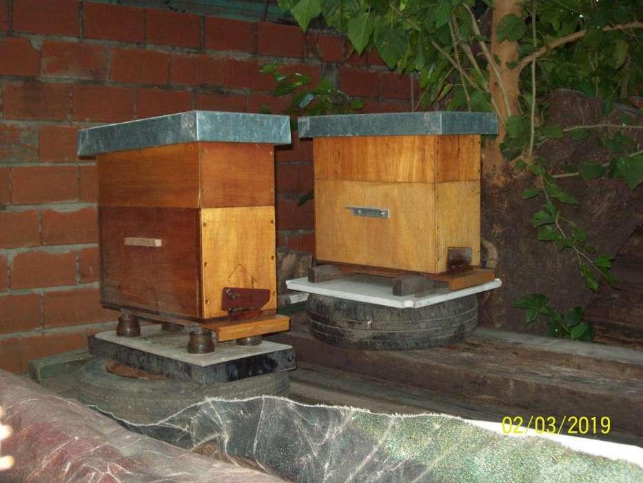 colmenas,apicultura. nucleos