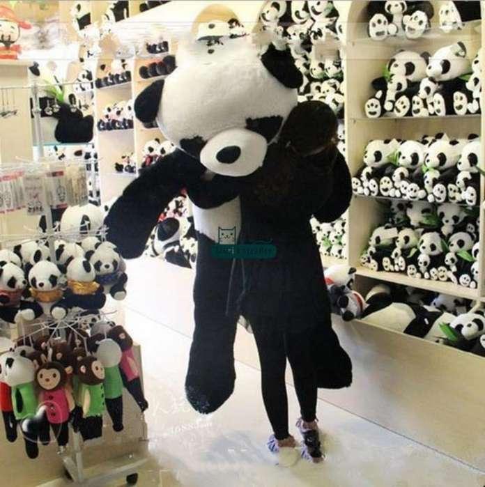 Osos Gigantes Pandas Informes Inbox W