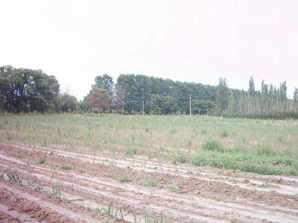 Finca de 15 hectáreas en San Rafael Mendoza